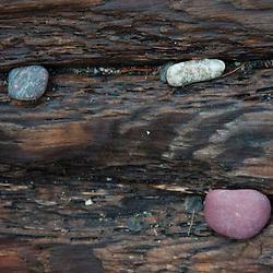 Driftwood and Rocks, Jones Island, San Juan Islands, Washington, US