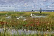Birds,Shinnecock County Park West, Hampton Bays, NY