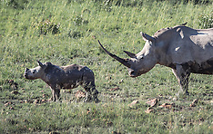 One agnry Rhino to 15 Elephants - 28 March 2018
