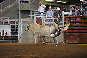 Bull Riding 2d Section
