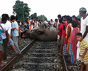 Around 07-numbers of wild elephant were killed and one seriously injured in the mid-night, when a speeding goods train hit the animals, while the elephants were crossing railway tracks near Binnaguri in Jalpaiguri district of Northeast Indian State, West Bengal, on 22nd September, 2010. Pix-Shib Shankar Chatterjee.