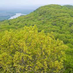 Spring on Mount Tom in Hoyoke, Massachusetts. New England Trail