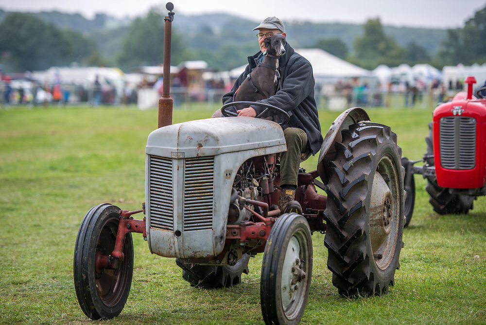 Mature male holds onto dog while driving vintage tractor, Masham, North Yorkshire, UK