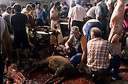 France. Marseille. The sacrifice of sheep in a slaughter house for the Muslim  Aid  feast  Marseille  France    /sacrifice du mouton dans les abattoirs pour la fête de l Aid  Marseille  France  /R00015/12    L2818  /  P0004016