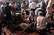 France. Marseille. The sacrifice of sheep in a slaughter house for the Muslim  Aid  feast  Marseille  France    /sacrifice du mouton dans les abattoirs pour la fête de l Aid  Marseille  France  /R00015/12    L2818  /  P0004016