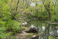 The Loch in the North Woods of Central Park.