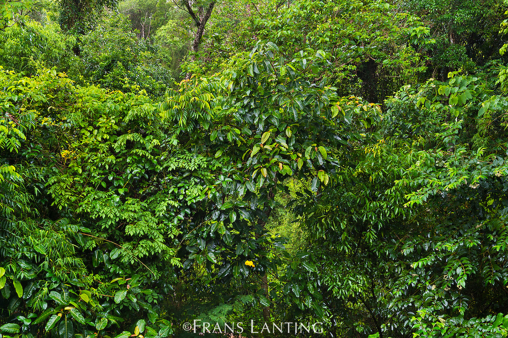 Tropical forest, Iguazu National Park, Argentina