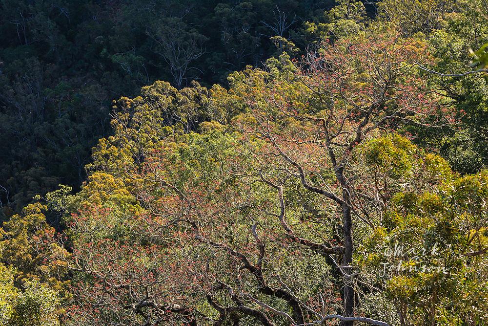 Bunya Mountains National Park, Queensland, Australia