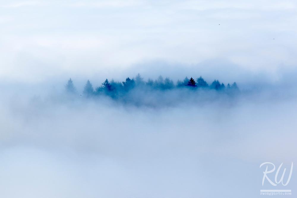 Forest Shrouded in Fog, Mt. Tamalpais State Park, California