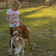 ROYAL PALM BEACH, FLORIDA, MARCH 15, 2017<br /> Cynthia Greaux's daughter  a Chloe, 8, pets her dog and a neighbor's dog in the park a short walk from their house. Greaux is able to use vouchers to pay for her daughter's and son's enrollment at a private school that specializes in educating children with dyslexia.<br /> (Photo by Angel Valentin/Freelance)