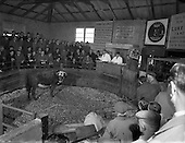 1956 -  Auction Cattles Ring at Drogheda, Co Louth, Ireland.