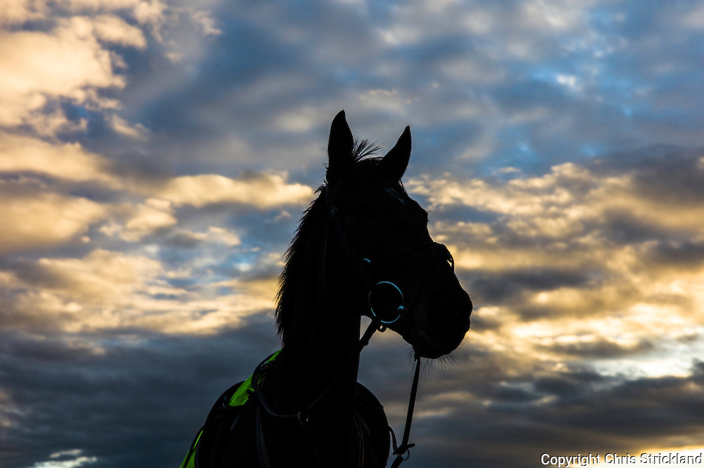 Bonchester Bridge, Hawick, Scottish Borders, UK. 25th November 2015. Racehorse 'Oscar Stanley' waits for his jockey while being schooled at sunset in the Scottish Borders.