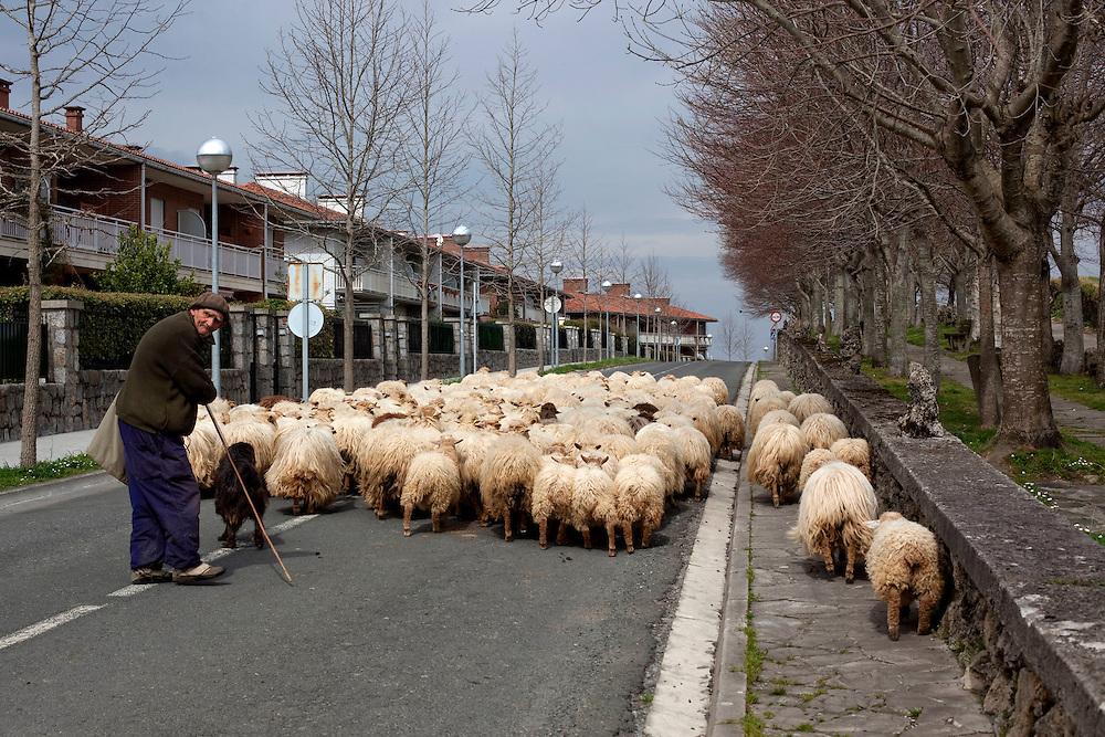 """March, 24th, 2010. In the hamlet Agerre-Buru (located in the small village of Aia, Gipuzkoa), owned by Modesta and sons, is made Idiazabal cheese is a Protected Designation of Origin (PDO) of the Basque Country and Navarra (except the Roncal Valley has its own PDO). Cheese is made from sheep's milk """"Latxa"""" that is indigenous to the Basque Country. That fatty cheese has a maturation time of a minimum of sixty days, between 1 and 3 kg per unit, pressed and uncooked. PHOTOS BY TONI VILCHES...[SPANISH] En el Caserío Agerre-Buru (situado en el pueblo de Aia, Gipuzkoa), propiedad de Modesta y sus hijos, se fabrica el queso idiazábal que es denominación de origen del País Vasco y Navarra (excepto el Valle del Roncal que tiene su propia denominación de orígen). El queso se hace con leche de oveja """"Latxa"""" que es autóctona del País Vasco. Es un queso graso con una maduración mínima de sesenta días, de entre 1 y 3 kg por unidad, prensado y no cocido."""