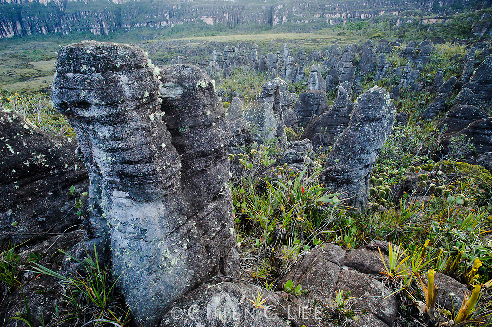 Rock formations on the summit of Amuri Tepui.
