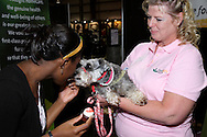 Carrie Shapiro of FirstLight Home Care (right) holds her 3-year-old German miniature schnauzer Leah for Mary-Lily Williamson, 11 of Dayton during the Dayton Women's Fair at the Airport Expo.Center in Vandalia., Saturday, September 17, 2011.  Leah is a therapy dog, trained to provide affection and comfort.