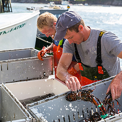 """Captain Matt Clemmons (front) and sternman Collin Grady unload lobster aboard """"Mean Kathleen"""" at Potts Harbor Lobster in Harpswell, Maine."""