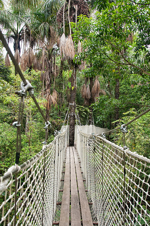 The treetop walk at The Zoo de Guyane, or Zoo of French Guiana, is one of the regions top tourist attractions and contains animals and plants from the French region in South America