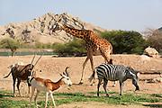 Al Ain Wildlife Park