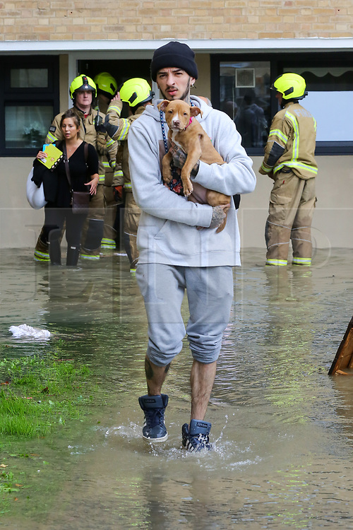 © Licensed to London News Pictures. 08/10/2019. London, UK. A man holds a dog in Theobalds Court following a burst water main on Brownswood Road in Finsbury Park, north London. Photo credit: Dinendra Haria/LNP