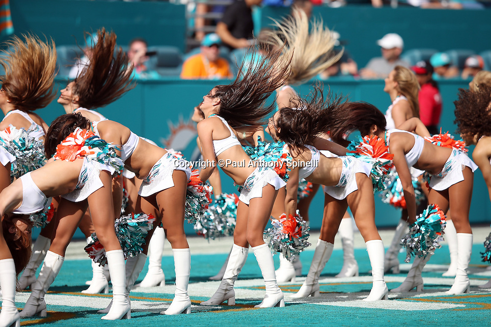 The Miami Dolphins cheerleaderd flip their hair during a dance routine during the 2015 week 13 regular season NFL football game against the Baltimore Ravens on Sunday, Dec. 6, 2015 in Miami Gardens, Fla. The Dolphins won the game 15-13. (©Paul Anthony Spinelli)