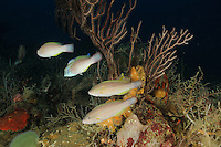 Parrotfish and Deepwater Seafan.