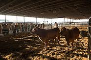 Master Cattleman training