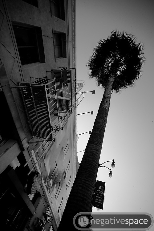 Low rent Hollywood palm and fire escape, Los Angeles, California