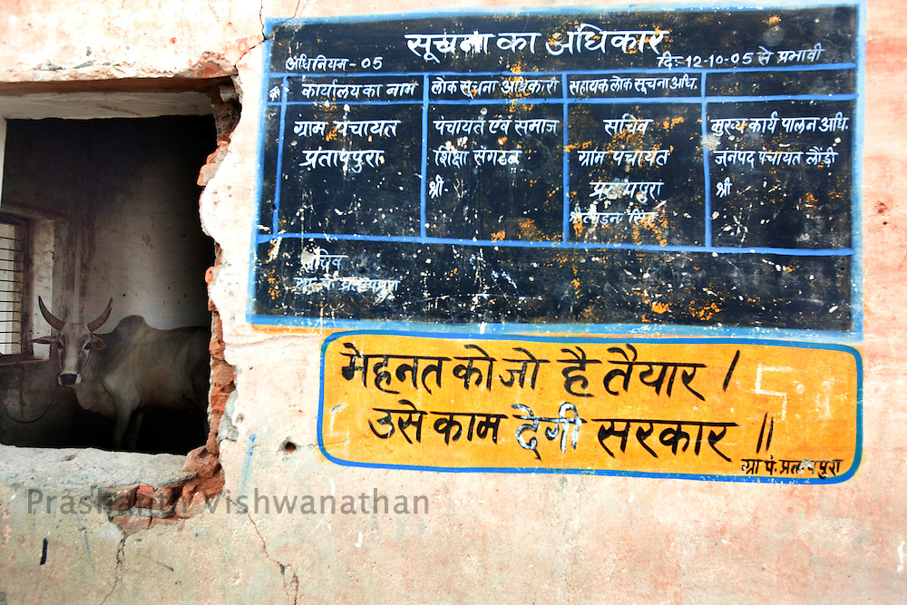 """A cow rests in a non functional government office, where a sign says, """" An individual who is ready to do hard work, government will provide him jobs."""" in Pratappura Chattarpur Madhya Pradesh, India, on Wednesday September 9, 2009. Photographer: Prashanth Vishwanathan/Action Aid"""