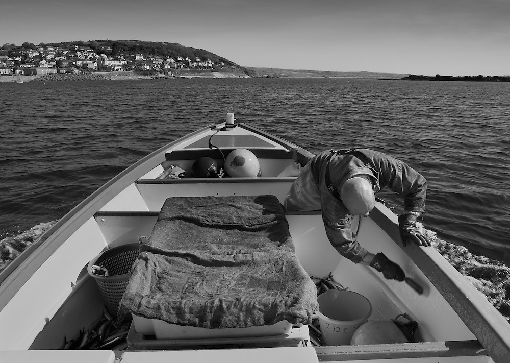 Joey Jeffery, handline fisherman, heading home.<br /> For most of the winter and spring months Joey will fish for mackerel along the coast from Newlyn and as the fish move 'around the corner' to St. Ives during the summer months, the fishermen will follow them. <br /> <br /> Handlining for mackerel is one of the most eco-friendly and sustainable forms of fishing and is usually done in the morning and evening.  Joey will leave the harbour as early as 3.30 a.m. in order to reach the fishing grounds by dawn. <br /> <br /> After a few hours, the boat is packed full of fish and the hour long journey back to Newlyn is made so that the catch can be unloaded, graded, weighed and packed with ice into the market's freezer, ready for the following morning's auction. <br /> <br /> Normally he would make a second trip later on in the day, but fishing has been good this morning and he senses that the shoals are still there and so heads straight back out. <br /> <br /> Joey has had various jobs within the fishing industry in Newlyn and now, as a highly experienced handline fisherman, he will be fishing for the much prized Bass later on in the year.