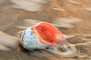 Surf Swirling around a whelk shell on the Outer Banks of NC.