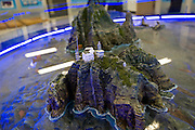 Officials look at a model of the disputed Dokdo Islands, known in Japan as Takeshima, at the East Sea Research Institute in Gyeongbuk, South Korea on 22 June 2010..Photographer: Robert Gilhooly