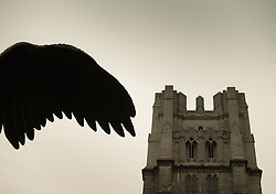 Angel wing and The Cathedral of Saint John Divine in New York City