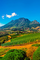 Vineyards atop Helshoogte Pass, near Stellenbosch, Cape Winelands (near Cape Town), South Africa.