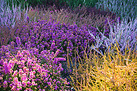 Menagerie of Colorful Flowers at Mendocino Coast Botanical Gardens, Fort Bragg, California