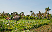 Farmer's thatched roof huts in the fields near Amed, Bali, Indonesia