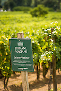 Durnstein, Danube, Lower Austria, September 2015.  Domäne Wachau is deeply rooted in the Wachau region. Close to 440 hectares of vineyards are cultivated by the members of this quality-oriented cooperative – that makes 30 percent of the entire Wachau vineyard area.  These vineyards are found on steep terraces reinforced by old dry stone walls and are part of a World Cultural Heritage. The pretty town of Dürnstein, on a supple curve in the Danube, is not only known for its beautiful buildings but also for the castle above the town where Richard I (the Lionheart) of England was once imprisoned. Austria's most spectacular section of the Danube is the dramatic stretch of river between Krems an der Donau and Melk, known as the Wachau. Here the landscape is characterised by vineyards, forested slopes, wine-producing villages and imposing fortresses at nearly every bend. The Wachau is today a Unesco World Heritage site, due to its harmonious blend of natural and cultural beauty. Photo by Frits Meyst / MeystPhoto.com