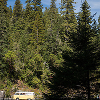 A yellow Volkswagen bus parked on the Smith River riverbed in the forest at Jebediah Smith Redwoods State Park in Northern California, USA.