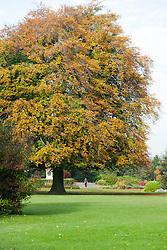 Autumn trees in Weston Park Sheffield<br /> 21 October 2012<br /> Image © Paul David Drabble