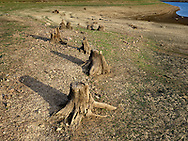 http://Duncan.co/tree-stumps-at-phillips-lake-reservoir/