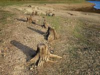http://Duncan.co/tree-stumps-at-phillips-lake-reservoir/