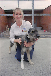 RSPCA worker nursing injured dog,