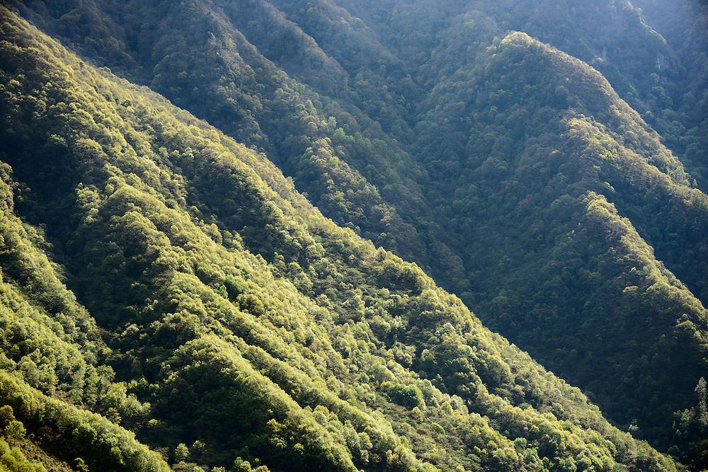 覆盖山脊与山谷的森林,唐家河自然保护区,四川,中国。Mountain and forest, Tangjiahe Nature Reserve, Sichuan, China.