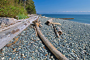 Driftwood on Sandcut Beach. <br />