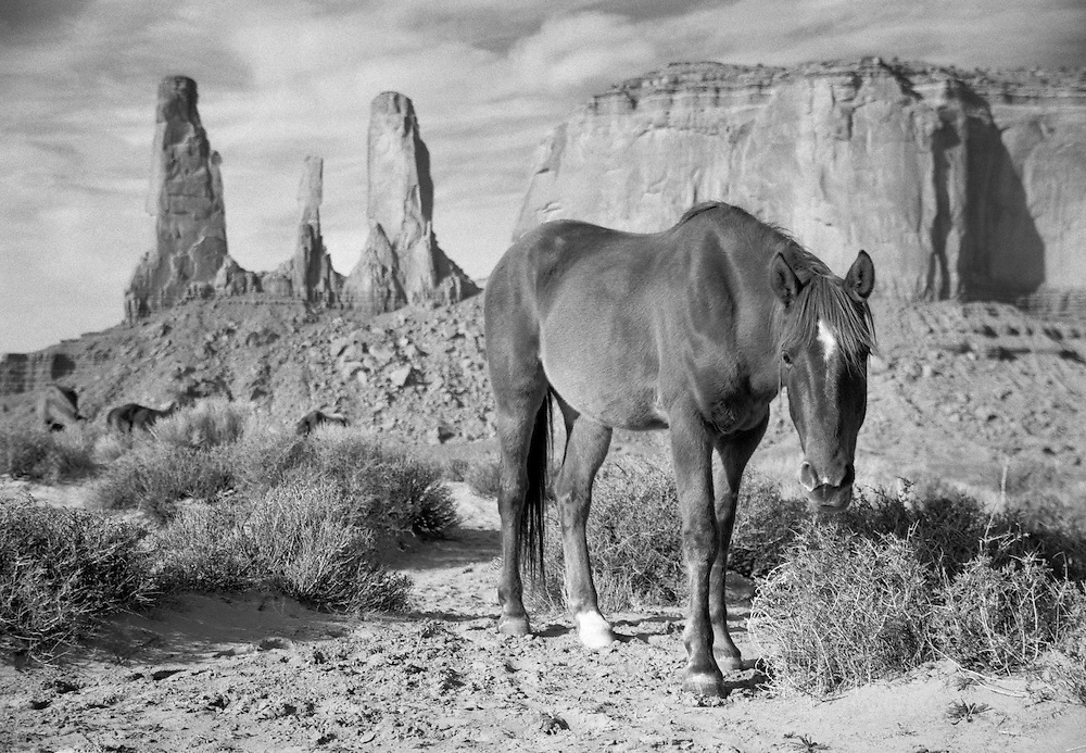 A wild mustang in Monument Valley