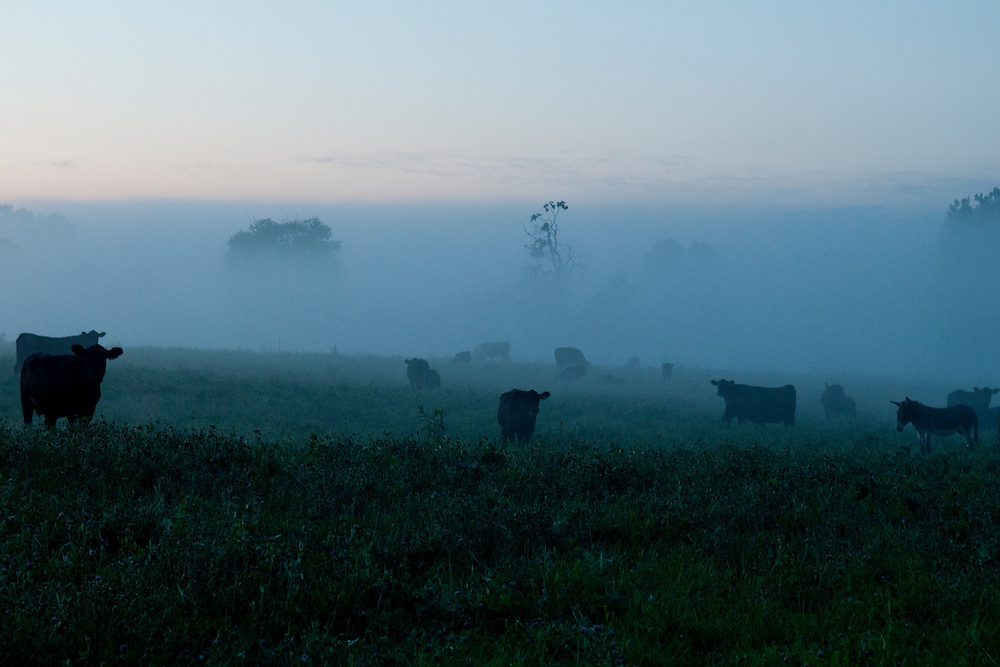 Images of the farms and landscapes of rural Indiana.