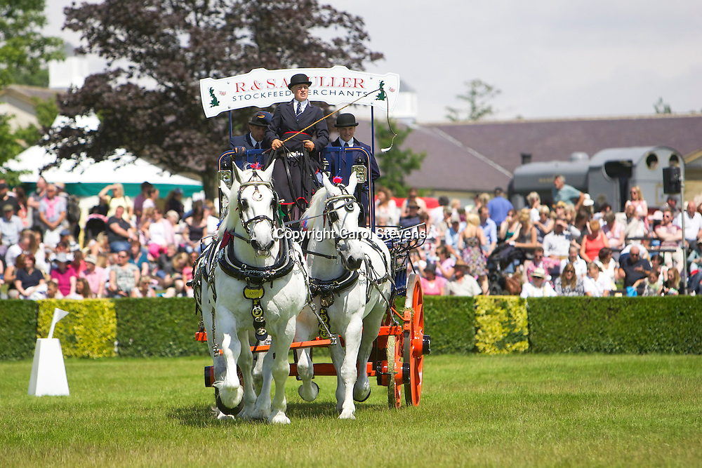 Mary Fuller and Dick Fuller's grey gelding Percherons Team of Earl, Lightning &amp; Andy<br />