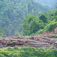 Felled trees ready for transport out of Imbak Canyon Conservation Area, Sabah, Malaysia, Borneo, South East Asia.