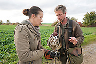 Falconers Vladimir Garaj and Ulrike Stumvoll attach a small camera to the back of an 18-month old Saker Falcon (Falco cherrug), near Rosenburg, Walviertel region, Lower Austria © Rudolf Abraham