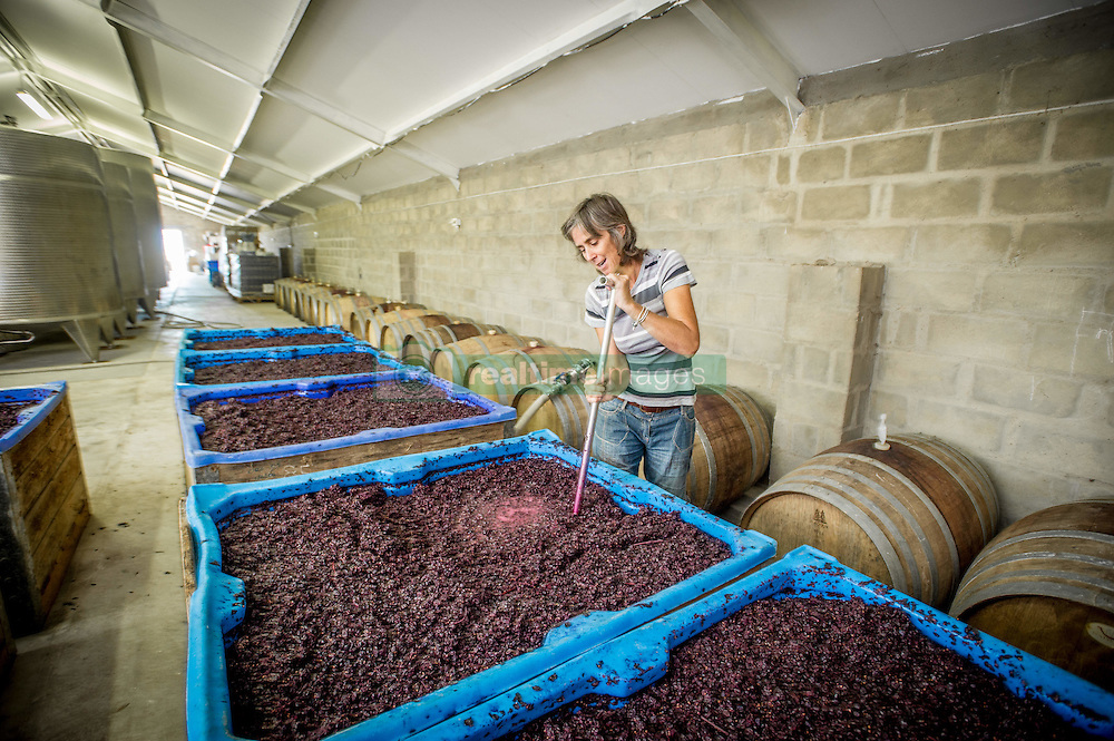 March 6, 2015 - Paarl, Western Cape, South Africa - Paarl, South Africa - Wine makers punching down the cap on wine grapes fermenting for red wine (Credit Image: © Edwin Remsberg/VW Pics via ZUMA Wire)