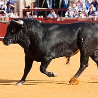 Bull fight scenes in Seville Spain
